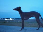becolors online shop