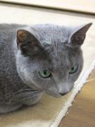 猫町フミヲさんのプロフィール
