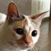 シロときどきチロ〜完全敷地内飼いのネコたち〜