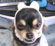 マイティマウスのブログ