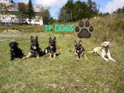 栃木県警察犬訓練所さんのプロフィール