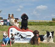 wavekids flyball club