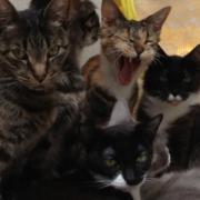 猫27頭多頭飼育崩壊SOS静岡
