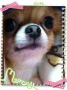 愛犬チロのおバカ日記・プチ財テク日記