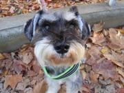 Chien 〜 life with dogs〜