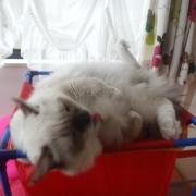ホロン the Cat