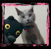猫もいるヨ!手作りキルト!神戸のマダムK