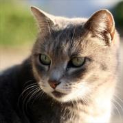 「大阪 Cat Story2」