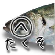 へなちょこオヤジの福岡東部波止時々沖釣り紀行