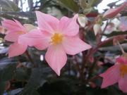 上尾市 花光のブログ