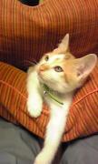 お気楽極楽 セブ君とマンタ君の猫ブログ 第2期