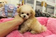 CHU CHU DOG