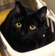 黒猫ヴィヴィの日々