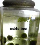 nobo-beeのんびり日記