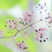 『四季の声』心休まる北東北の風景写真