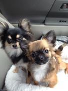 オッサンと犬