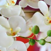 広島DECOクレイ教室☆粘土で作る花と造形
