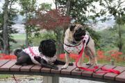 きゅーたんの愛犬教育ママ日記
