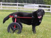 Battysスタッフの犬用車椅子普及運動ブログ