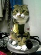 Scottish fold cat が聴いたこと