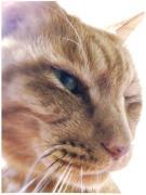 姫猫さんのプロフィール