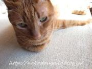 猫のおもしろ動画