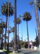 ロサンゼルス留学日記 TOEIC930点から英語勉強法
