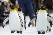 でかペンギンのFX