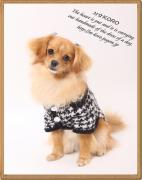 犬服〜M☆KORO〜