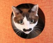 『猫まるカフェokinawa』モカっちの気まぐれブログ♪