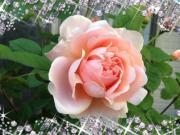 リサリサの小さなお庭〜ガーデンウッド〜