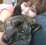 甲斐犬レオとワカメの東駿河犬舎