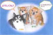 愛犬日誌:まろん&くるみ