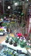 京都「花のフェニックス」さんのプロフィール