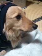 ジーノのマインドブログ