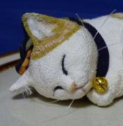 猫生活 今日のにゃんこ 今日のポーズ
