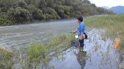 ◇琵琶湖・犬上川の小鮎釣り(犬上川小あゆ爆釣り会)