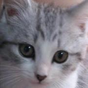 猫ブログまとめ