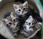 猫たちの気ままな旅日誌