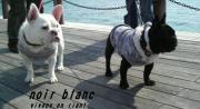 フレンチブルドッグ服 noir blanc