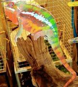 シンちゃんのタナゴ釣りでも海もいいかな〜2
