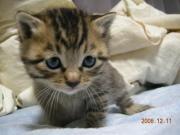 保護猫カフェ『ねこかつ』@川越@大宮日進