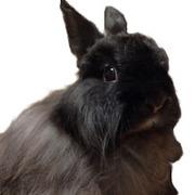 やっぱりウサギが好き