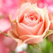 きみに花束を。
