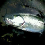 FishingTEAM GTC
