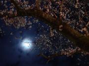 un jour de lune 〜或る月の日〜