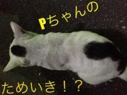 Pちゃんのためいき!?