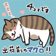 『猫4コマブログ』のめしこきですが…