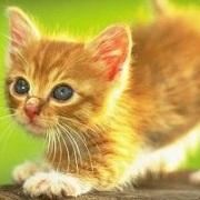 ねこ、ネコ、猫〜 の動画だよ!