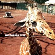 monareco blog